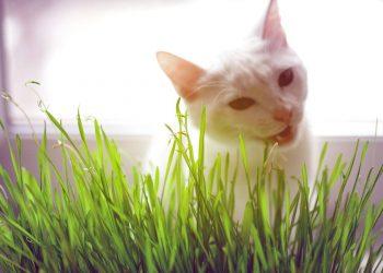white cat behind grass