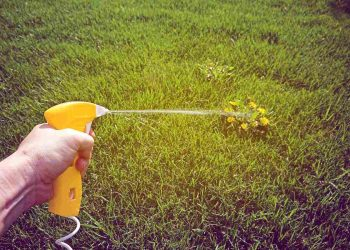 weed killer on lawn