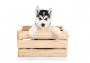 Dog in wooden crate