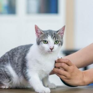 Vet Checking Senior Cat