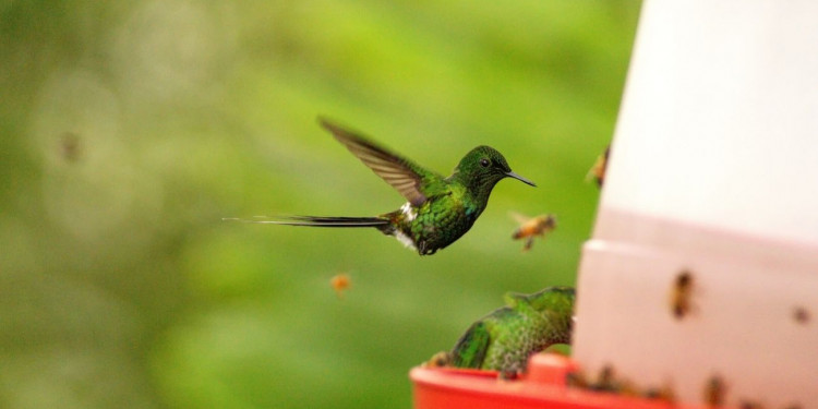 How To Keep Bees Away From Hummingbird Feeders featured image