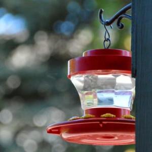 hummingbird red