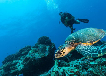 Why Do Scuba Divers Need A Jon Line? | LifeStyle Reviews